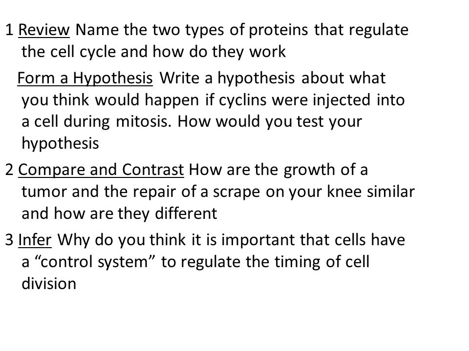 1 Review Name the two types of proteins that regulate the cell cycle and how do they work Form a Hypothesis Write a hypothesis about what you think wo
