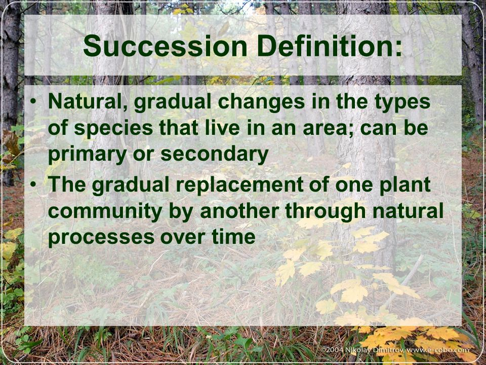 What is Succession.