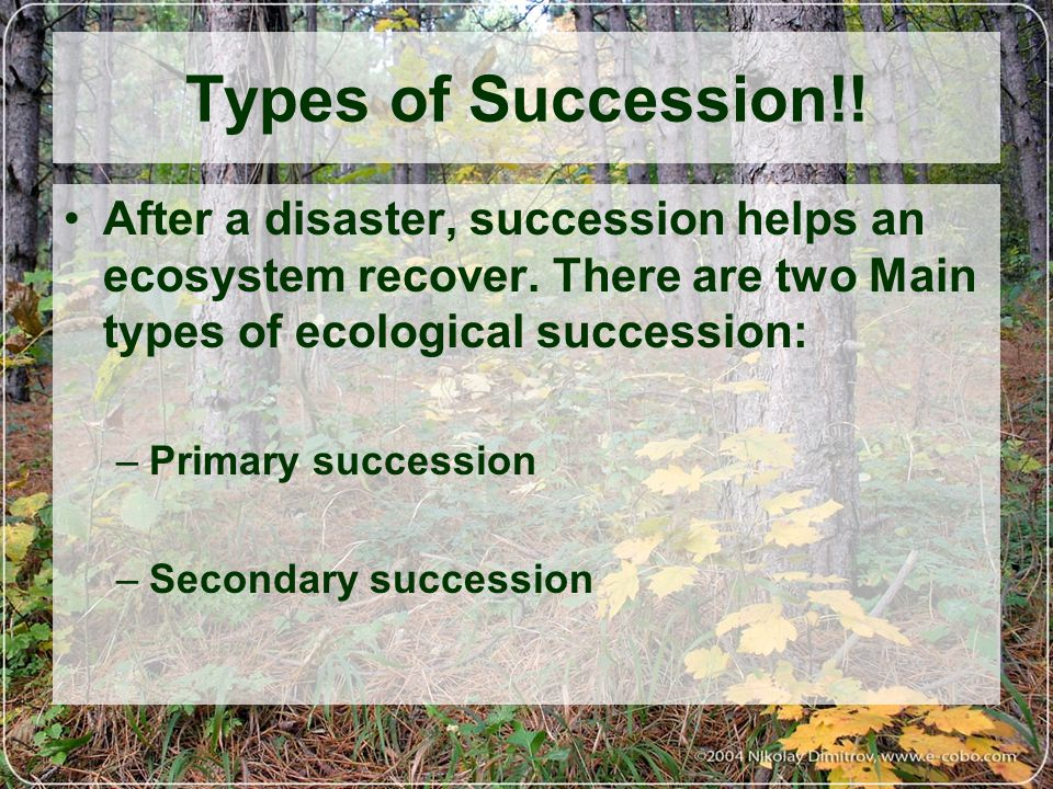 Primary Succession Begins in a place without any soil –Sides of volcanoes –glaciers melting away Starts with the arrival of living things such as lichens and moss that do not need soil to survive Called PIONEER SPECIES