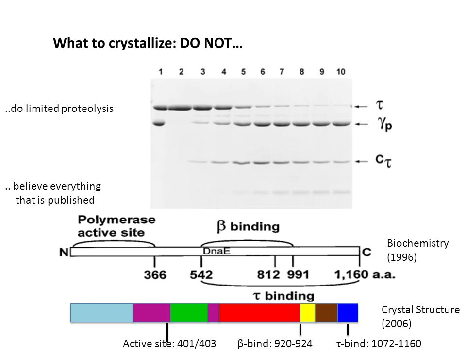 Biochemistry (1996) Crystal Structure (2006) Active site: 401/403β-bind: 920-924τ-bind: 1072-1160..do limited proteolysis What to crystallize: DO NOT…..