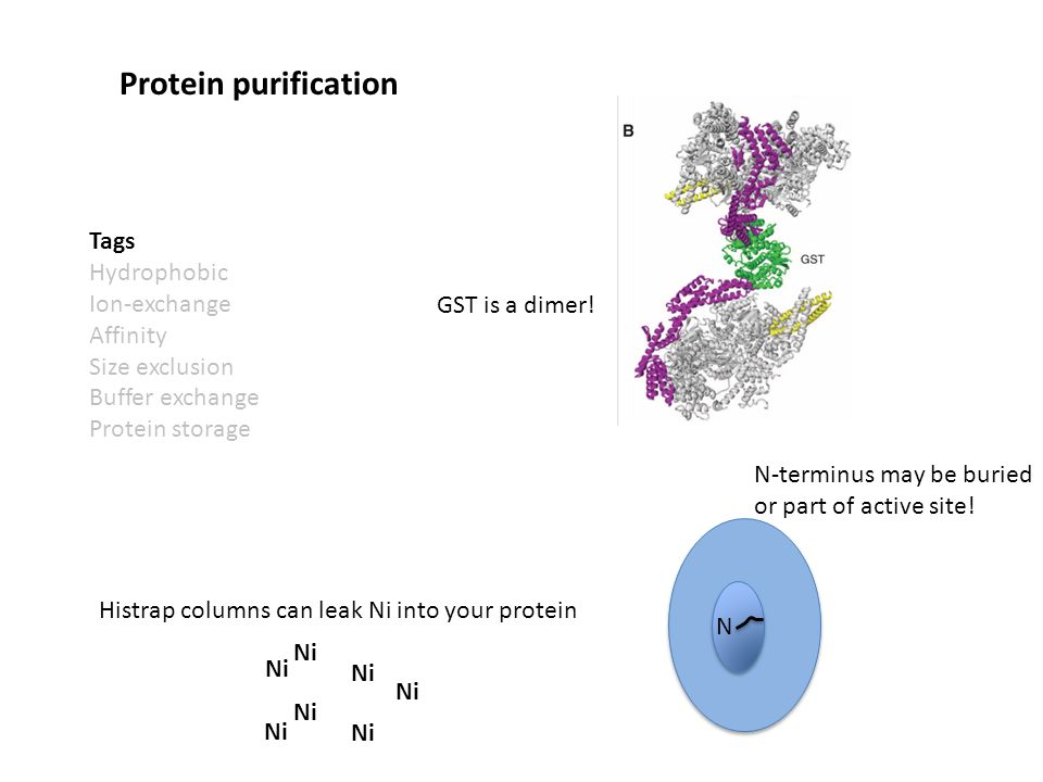 Tags Hydrophobic Ion-exchange Affinity Size exclusion Buffer exchange Protein storage Protein purification N Ni GST is a dimer.