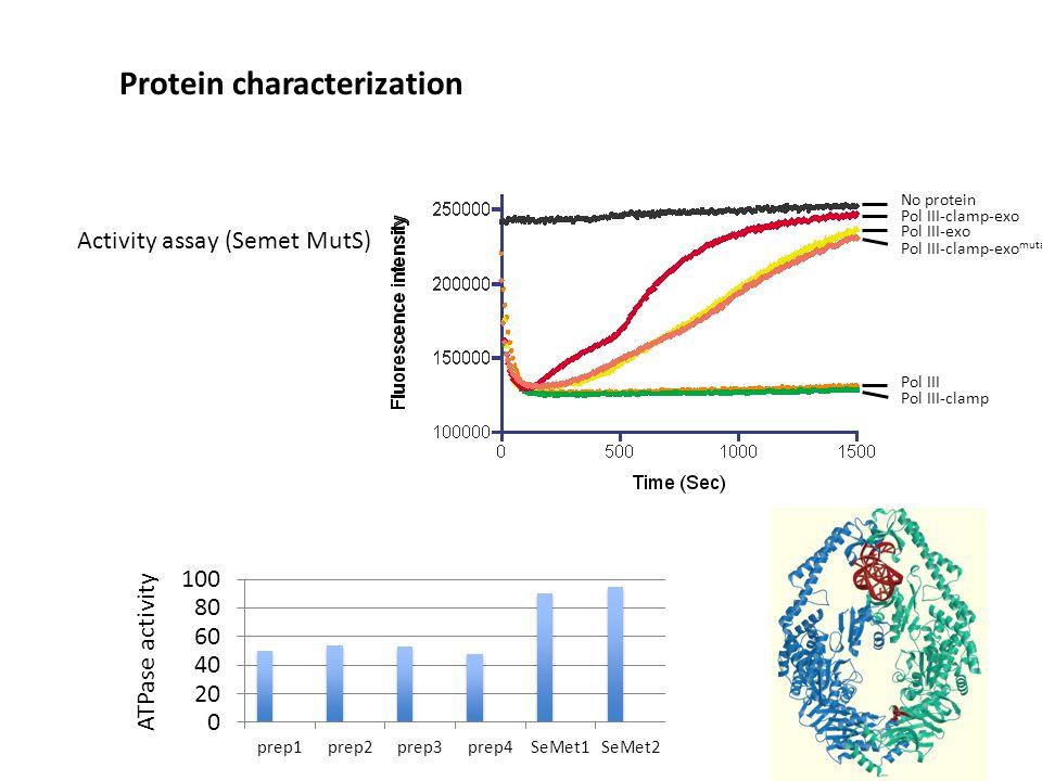 Activity assay (Semet MutS) Protein characterization No protein Pol III Pol III-clamp Pol III-clamp-exo Pol III-exo Pol III-clamp-exo mutant ATPase activity