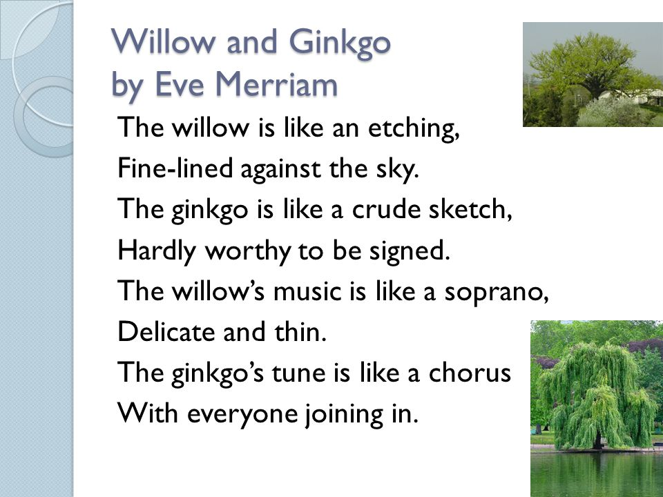 Willow and Ginkgo by Eve Merriam The willow is like an etching, Fine-lined against the sky. The ginkgo is like a crude sketch, Hardly worthy to be sig