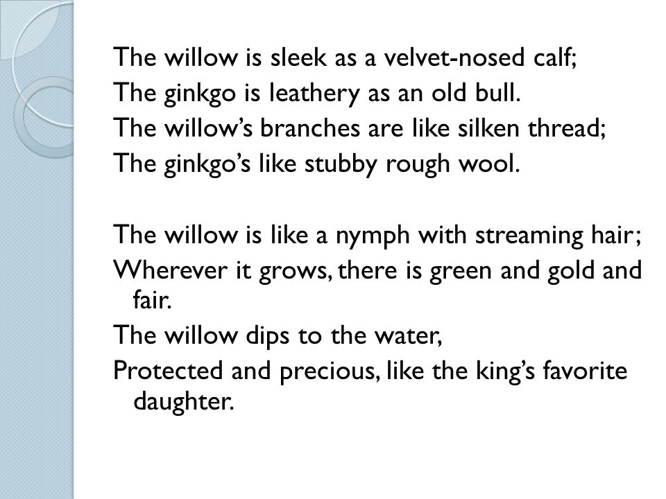 The willow is sleek as a velvet-nosed calf; The ginkgo is leathery as an old bull.