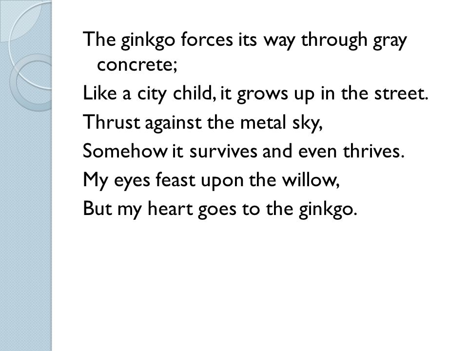 The ginkgo forces its way through gray concrete; Like a city child, it grows up in the street. Thrust against the metal sky, Somehow it survives and e