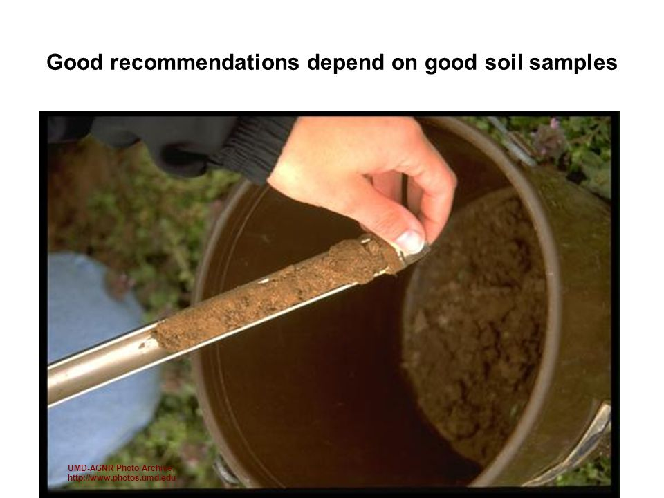 Good recommendations depend on good soil samples UMD-AGNR Photo Archive; http://www.photos.umd.edu