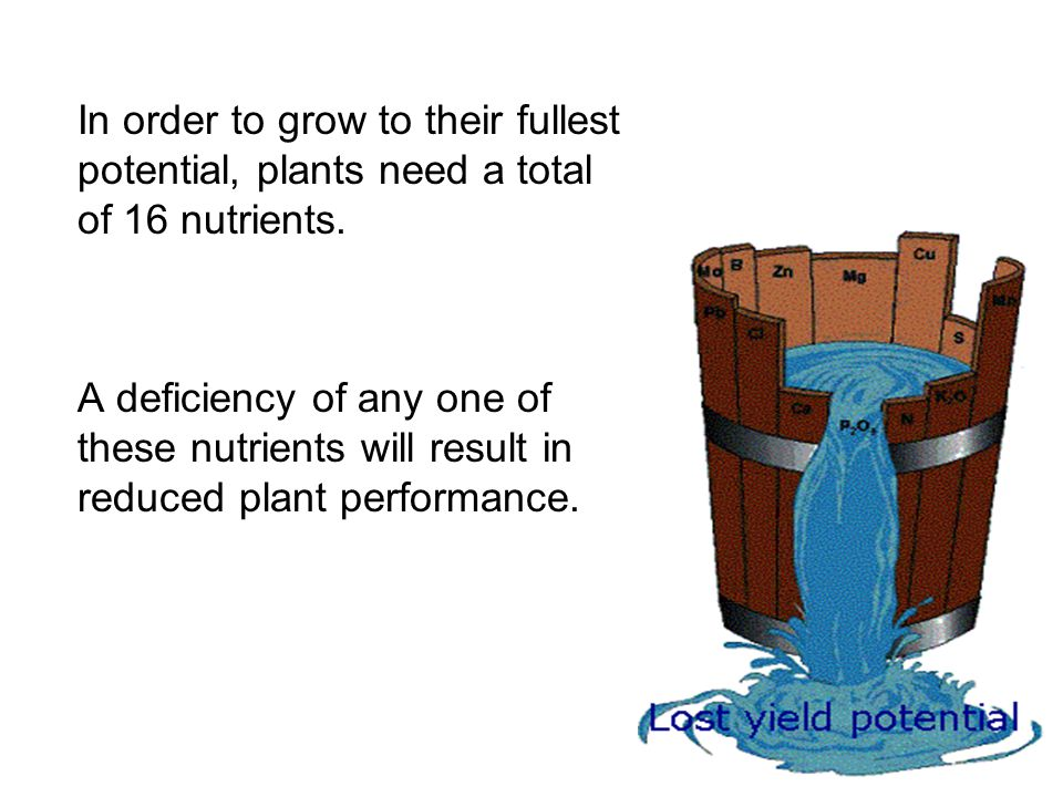 In order to grow to their fullest potential, plants need a total of 16 nutrients. A deficiency of any one of these nutrients will result in reduced pl