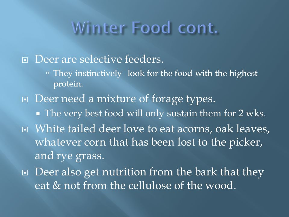  Deer are selective feeders.  They instinctively look for the food with the highest protein.