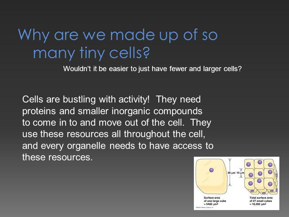 Wouldn't it be easier to just have fewer and larger cells? Cells are bustling with activity! They need proteins and smaller inorganic compounds to com