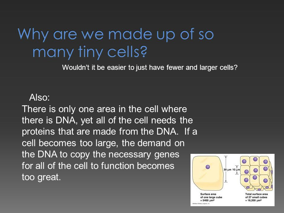 Wouldn't it be easier to just have fewer and larger cells? Also: There is only one area in the cell where there is DNA, yet all of the cell needs the