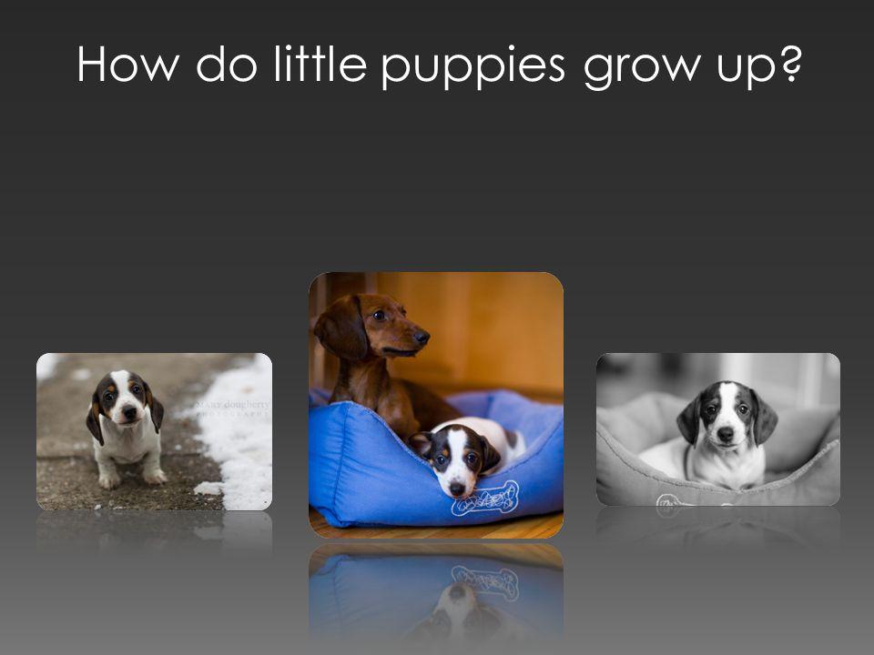 How do little puppies grow up?