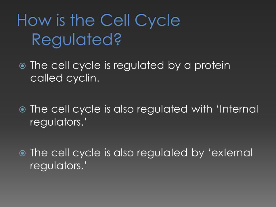  The cell cycle is regulated by a protein called cyclin.  The cell cycle is also regulated with 'Internal regulators.'  The cell cycle is also regu