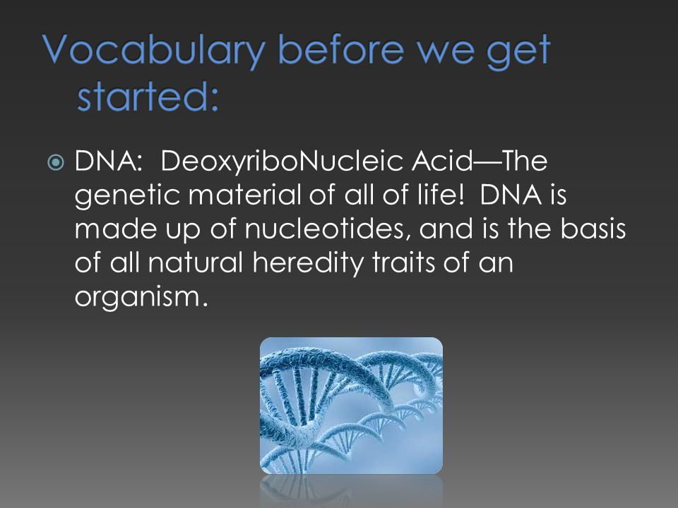  DNA: DeoxyriboNucleic Acid—The genetic material of all of life! DNA is made up of nucleotides, and is the basis of all natural heredity traits of an