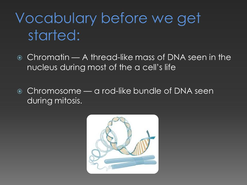  Chromatin — A thread-like mass of DNA seen in the nucleus during most of the a cell's life  Chromosome — a rod-like bundle of DNA seen during mitos