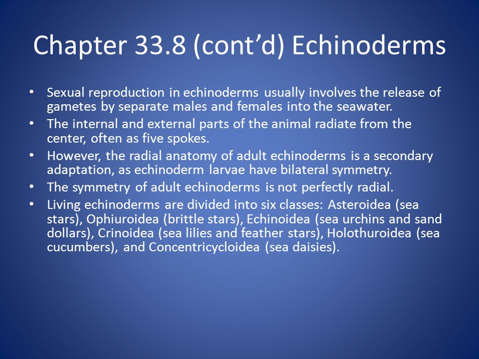 Chapter 33.8 (cont'd) Echinoderms Sexual reproduction in echinoderms usually involves the release of gametes by separate males and females into the seawater.