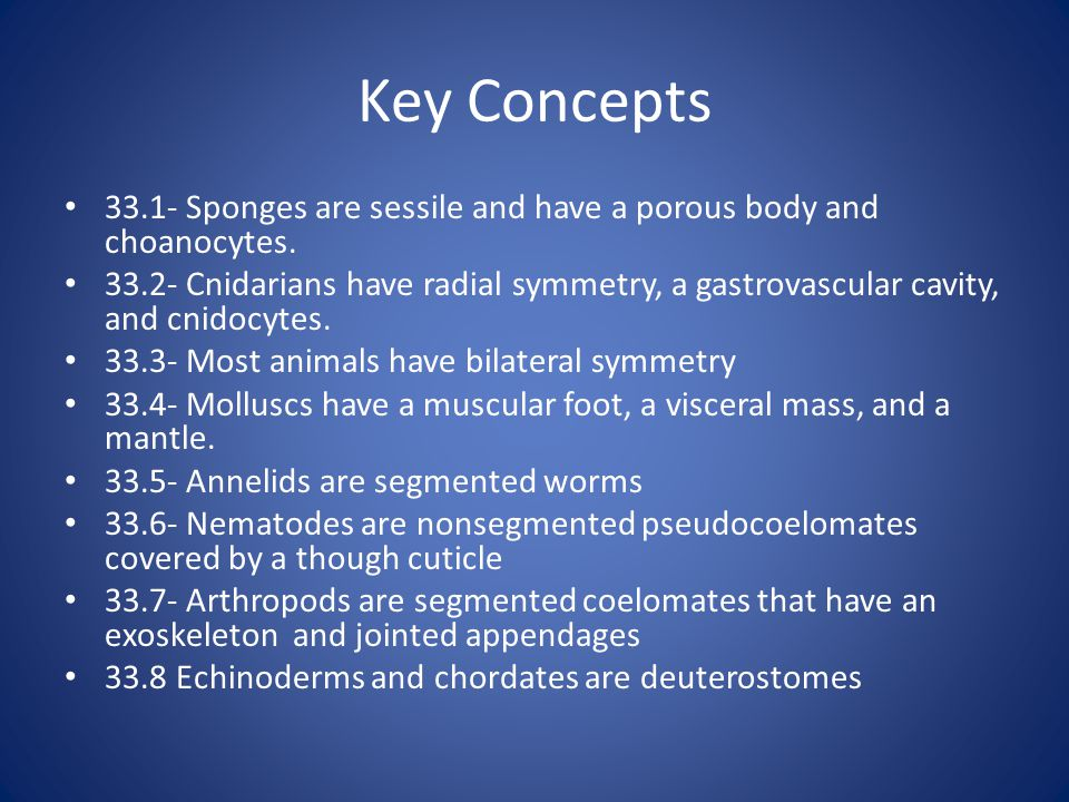 Key Concepts 33.1- Sponges are sessile and have a porous body and choanocytes.