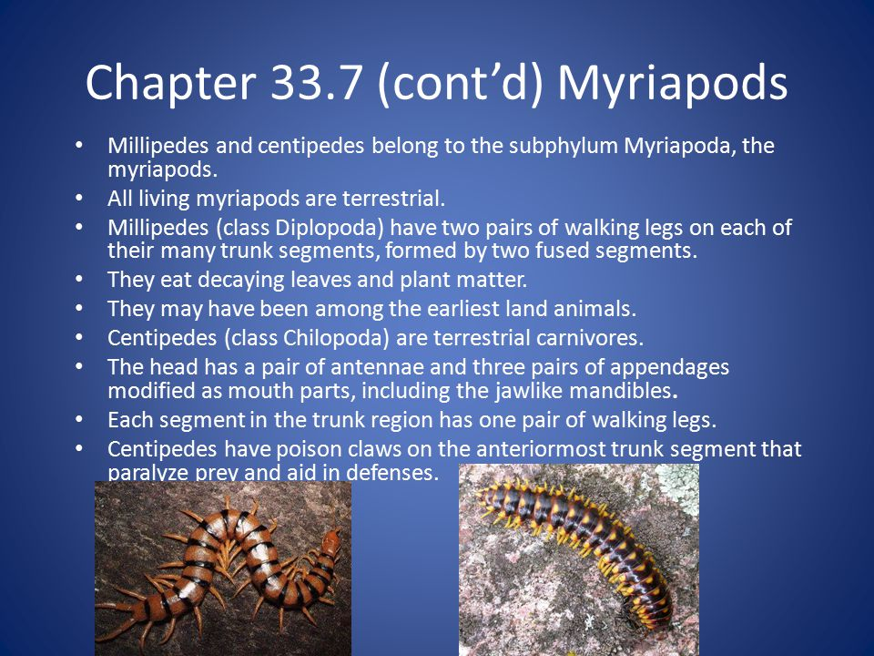 Chapter 33.7 (cont'd) Myriapods Millipedes and centipedes belong to the subphylum Myriapoda, the myriapods.