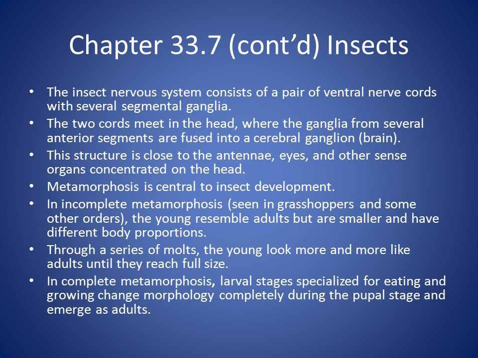 Chapter 33.7 (cont'd) Insects The insect nervous system consists of a pair of ventral nerve cords with several segmental ganglia.