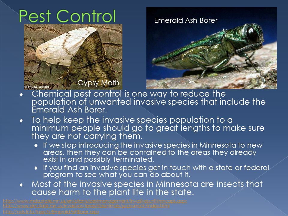 ♦ Chemical pest control is one way to reduce the population of unwanted invasive species that include the Emerald Ash Borer.