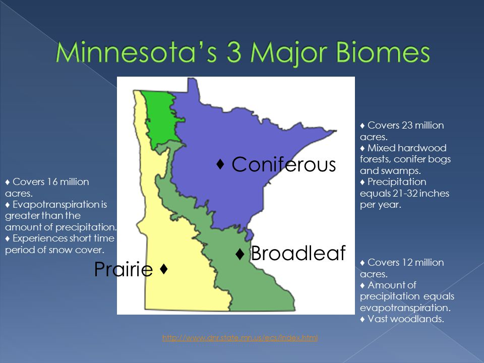 http://www.dnr.state.mn.us/ecs/index.html Broadleaf  Coniferous  Prairie ♦ Covers 12 million acres.