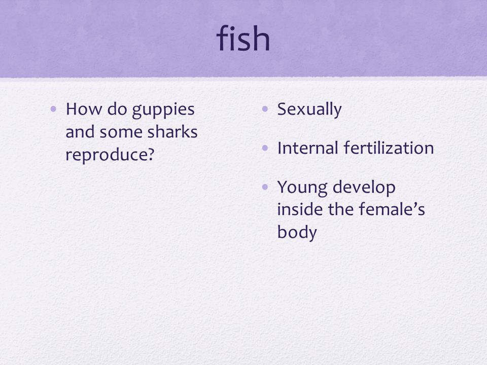 fish What is the fish nervous system used for.What helps them capture food.