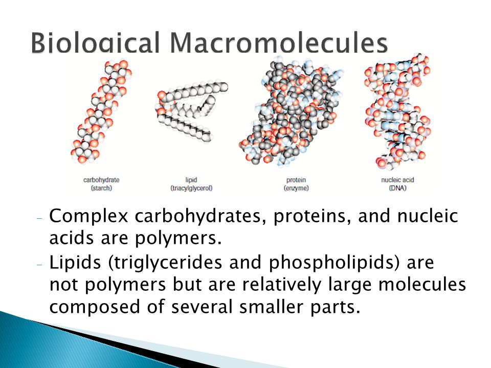 - Complex carbohydrates, proteins, and nucleic acids are polymers. - Lipids (triglycerides and phospholipids) are not polymers but are relatively larg