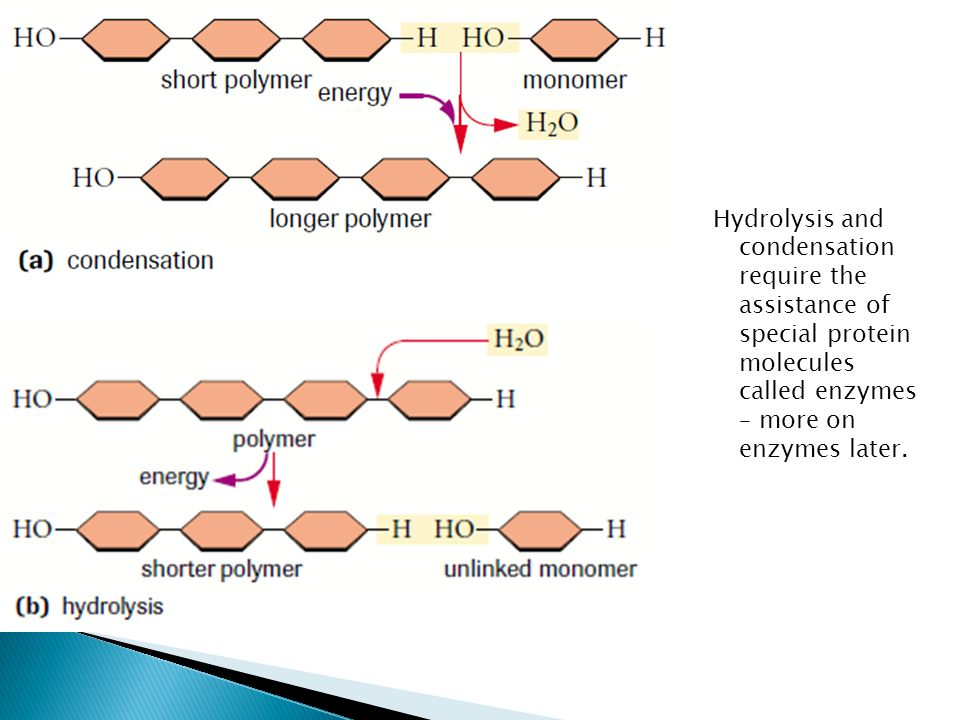 Hydrolysis and condensation require the assistance of special protein molecules called enzymes – more on enzymes later.