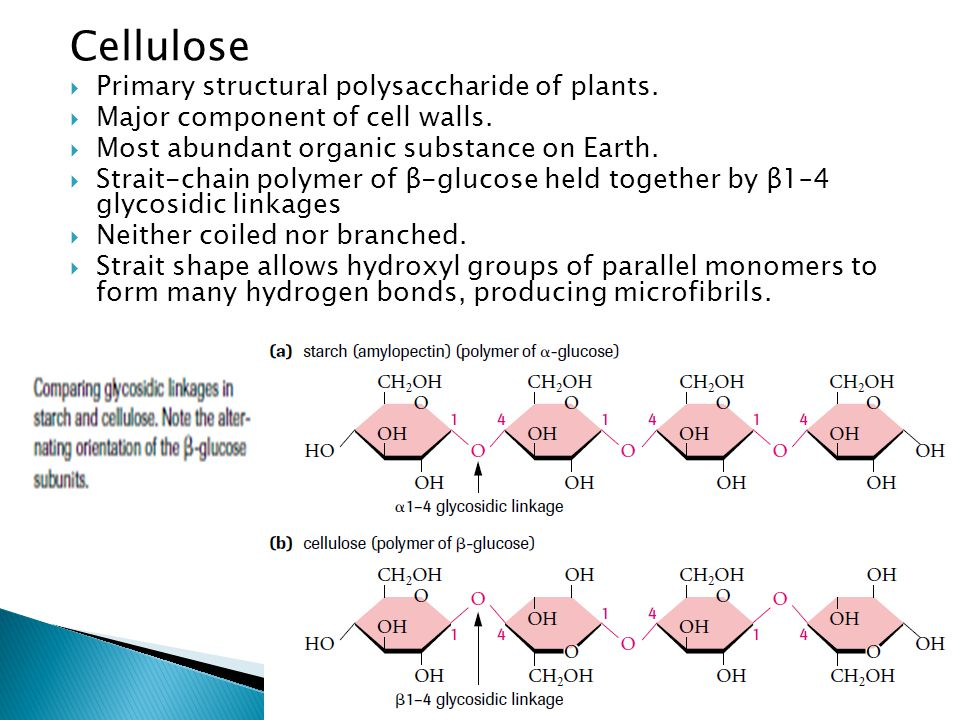 Cellulose  Primary structural polysaccharide of plants.  Major component of cell walls.  Most abundant organic substance on Earth.  Strait-chain p