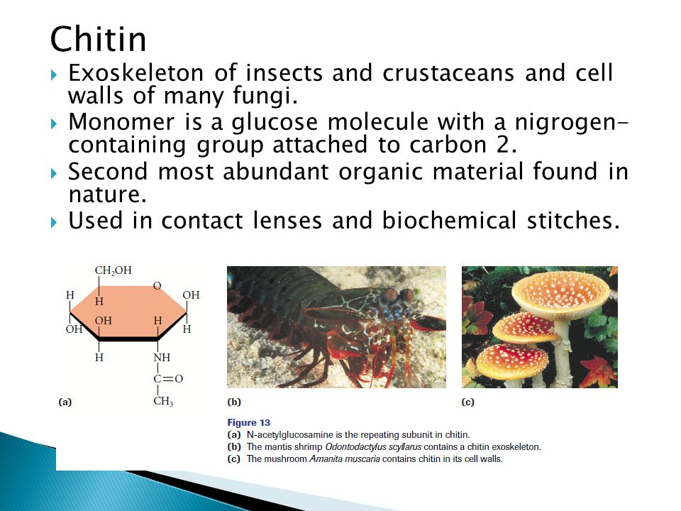 Chitin  Exoskeleton of insects and crustaceans and cell walls of many fungi.  Monomer is a glucose molecule with a nigrogen- containing group attach