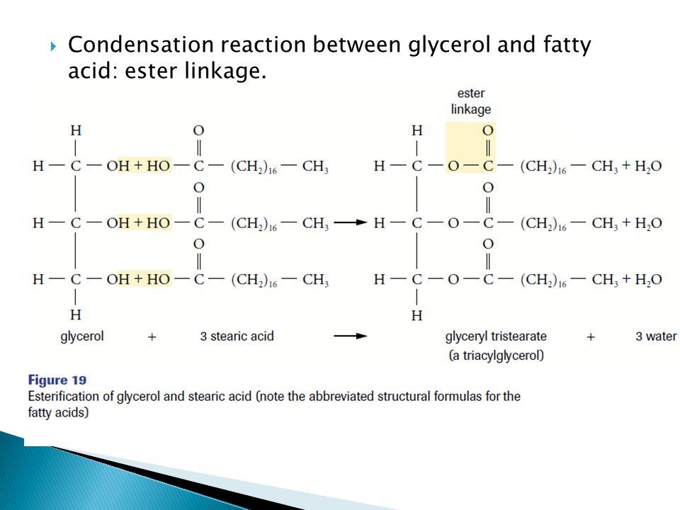  Condensation reaction between glycerol and fatty acid: ester linkage.
