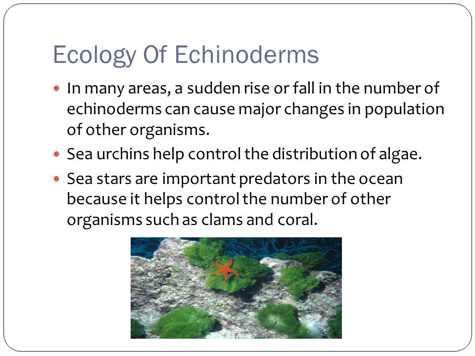 Ecology Of Echinoderms In many areas, a sudden rise or fall in the number of echinoderms can cause major changes in population of other organisms.