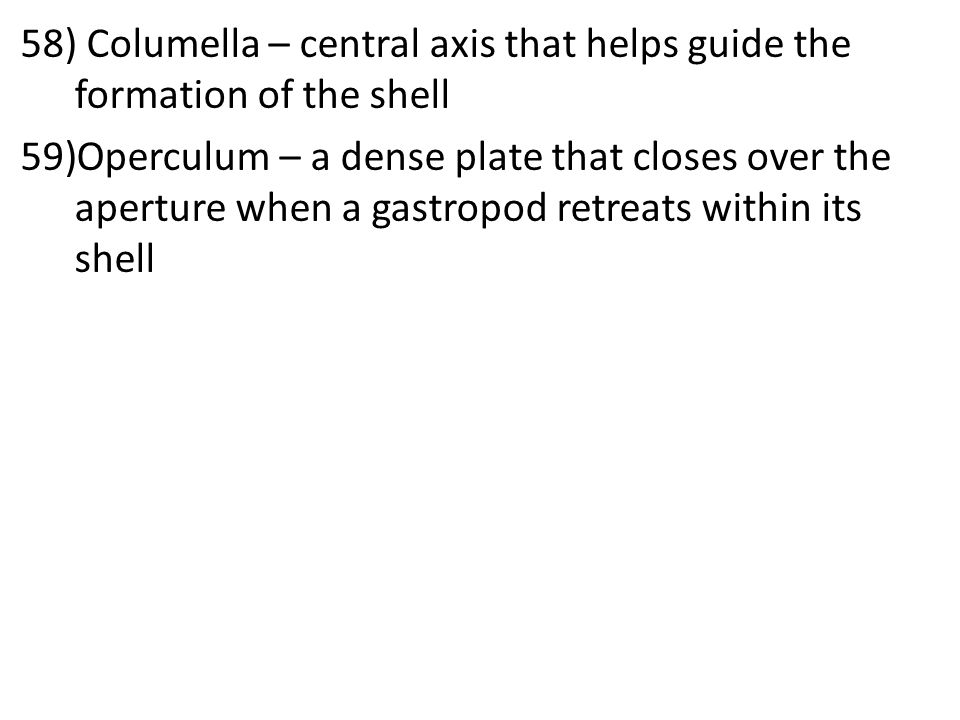 58) Columella – central axis that helps guide the formation of the shell 59)Operculum – a dense plate that closes over the aperture when a gastropod retreats within its shell