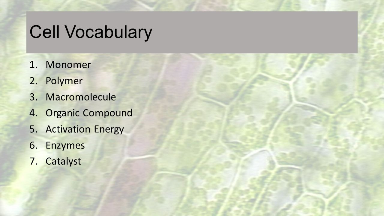 Cell Vocabulary 1.Monomer 2.Polymer 3.Macromolecule 4.Organic Compound 5.Activation Energy 6.Enzymes 7.Catalyst