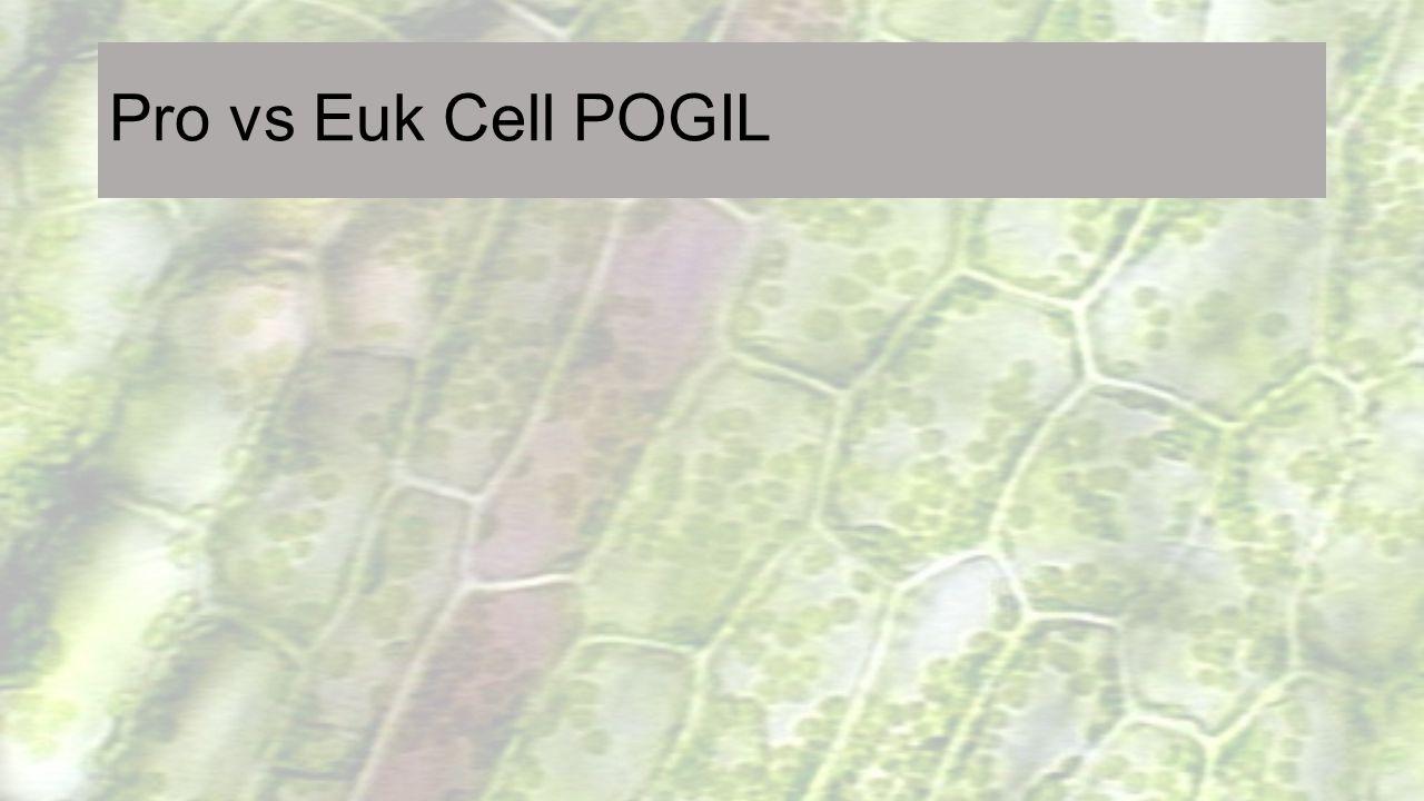 Pro vs Euk Cell POGIL