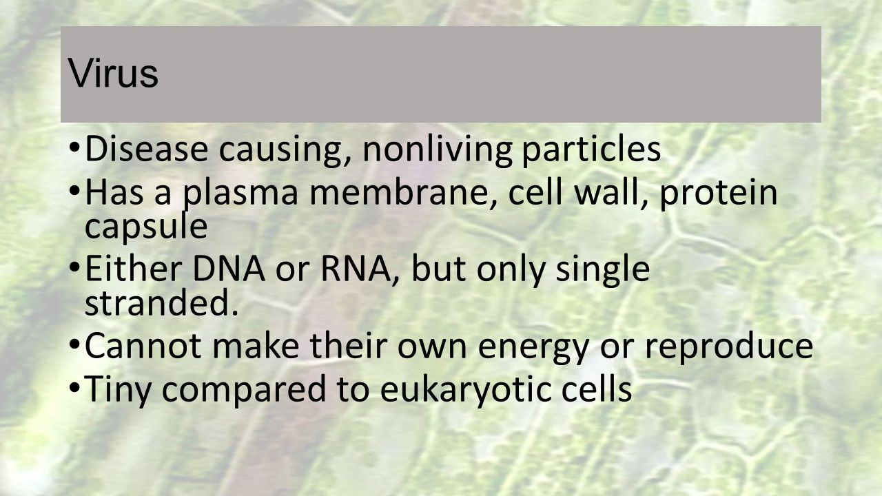 Virus Disease causing, nonliving particles Has a plasma membrane, cell wall, protein capsule Either DNA or RNA, but only single stranded. Cannot make
