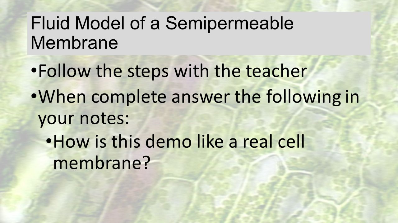 Fluid Model of a Semipermeable Membrane Follow the steps with the teacher When complete answer the following in your notes: How is this demo like a re