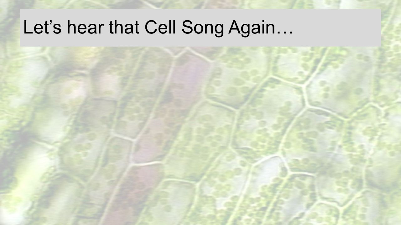 Let's hear that Cell Song Again…