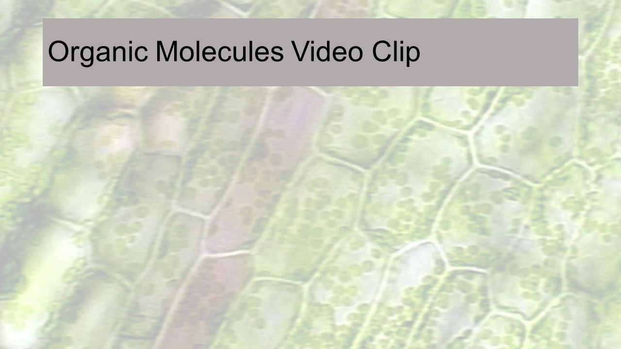Nucleus Directs cell activities Separated from cytoplasm by nuclear membrane Contains genetic material - DNA