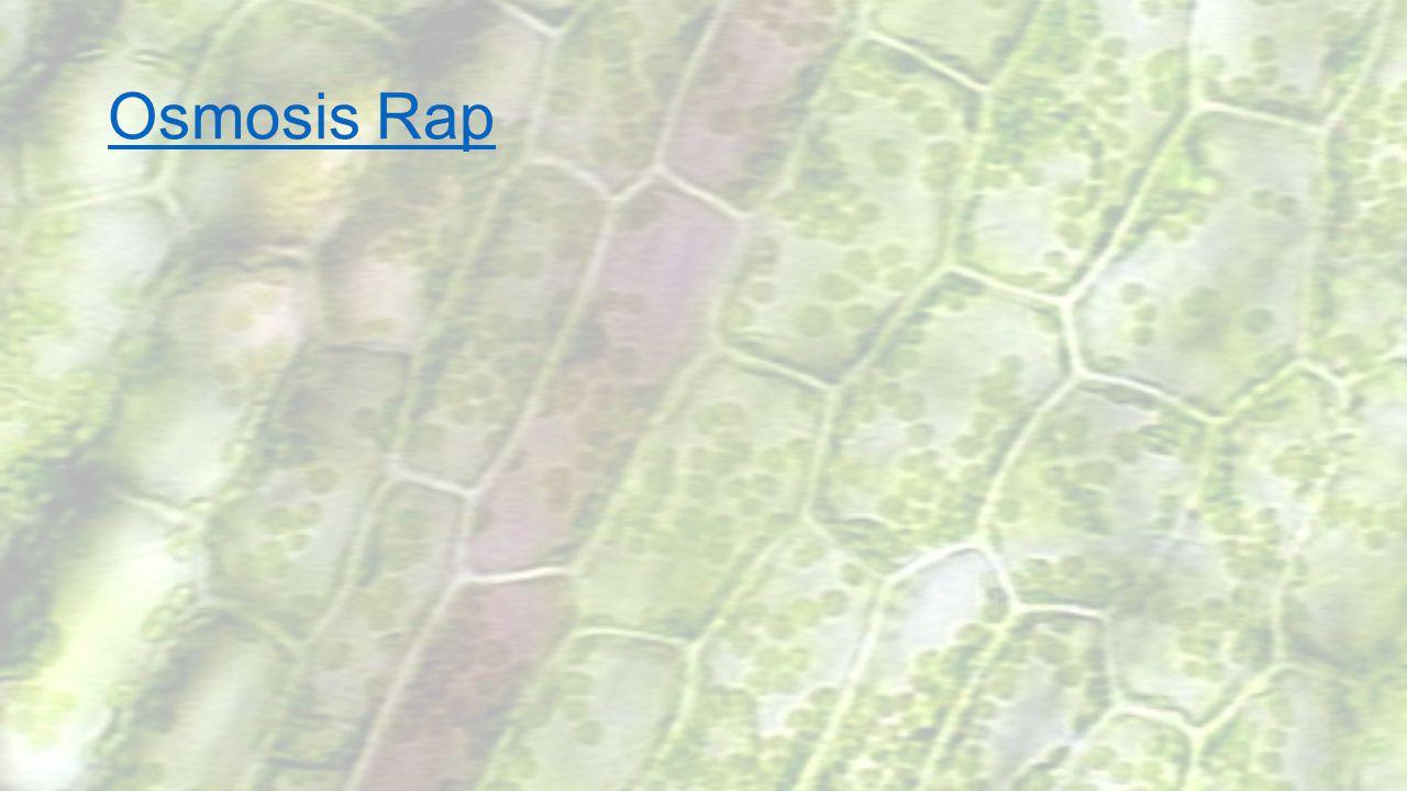 Osmosis Rap