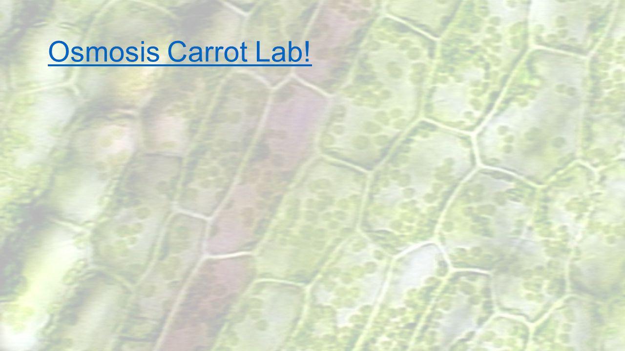 Osmosis Carrot Lab!