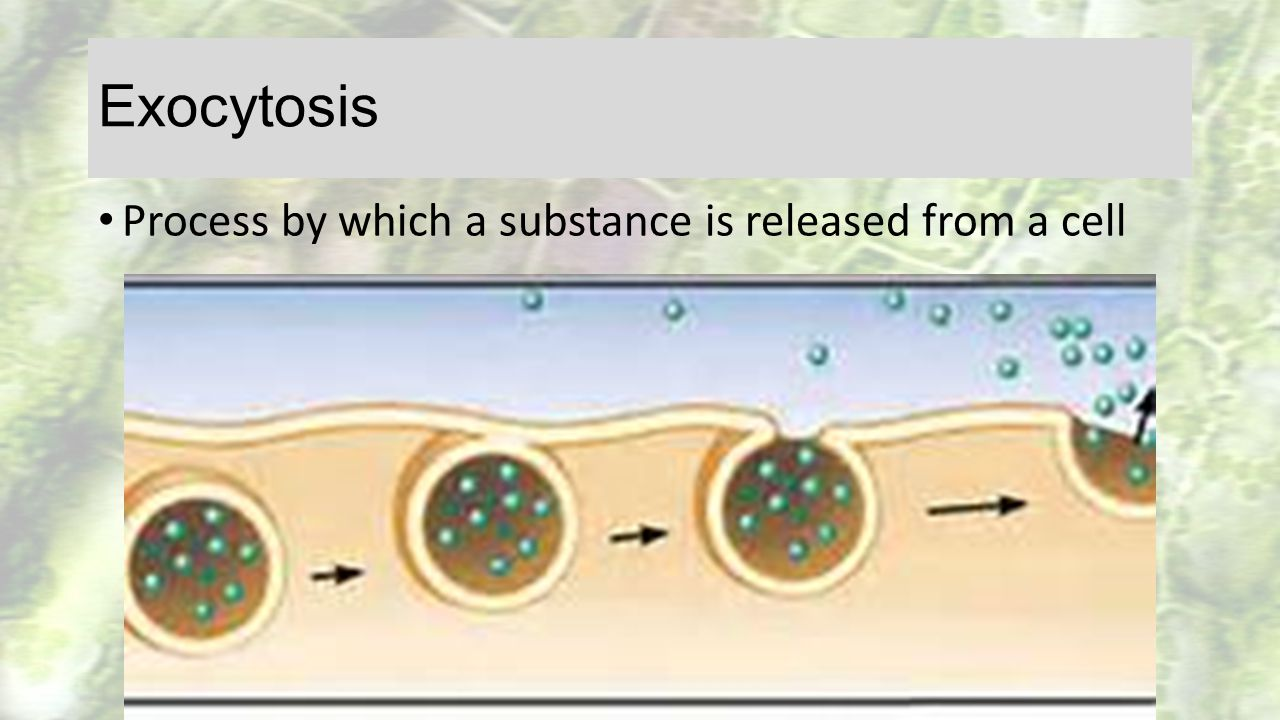 Exocytosis Process by which a substance is released from a cell