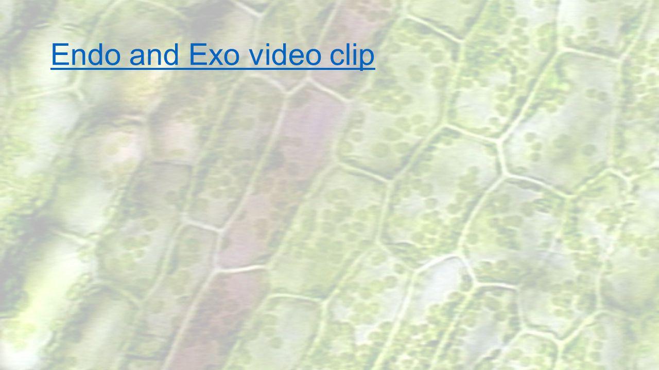 Endo and Exo video clip