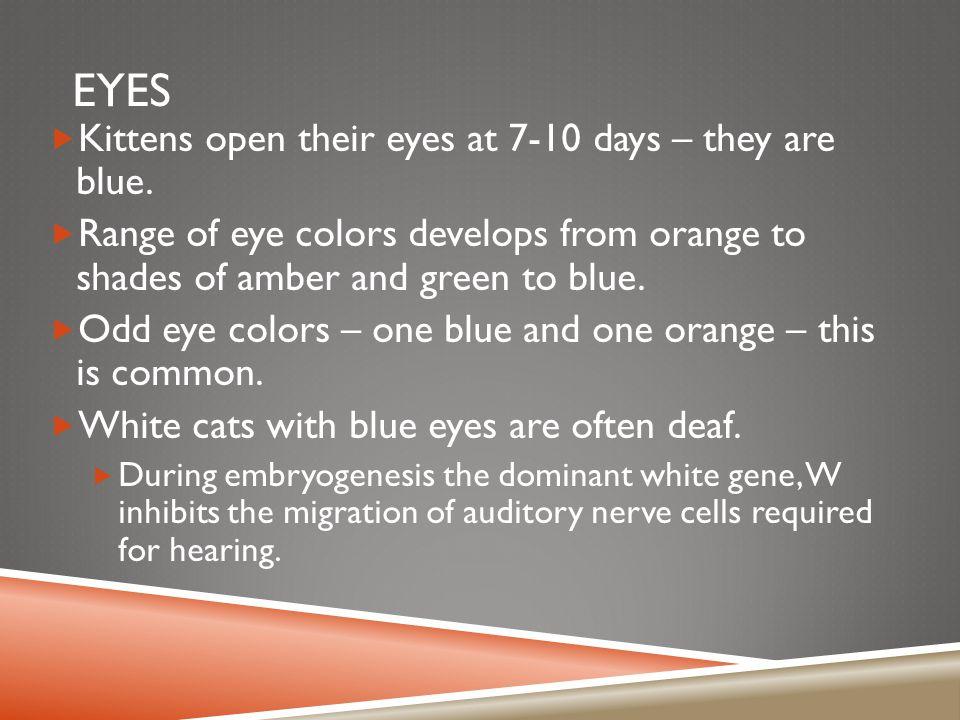 EYES  Eyeshine – The glowing of cat's eyes in the dark.