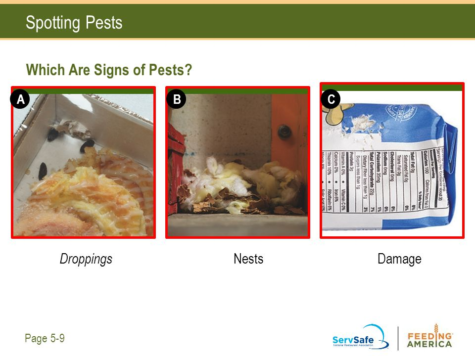 Spotting Pests Which Are Signs of Pests? Droppings NestsDamage Page 5-9 ABC
