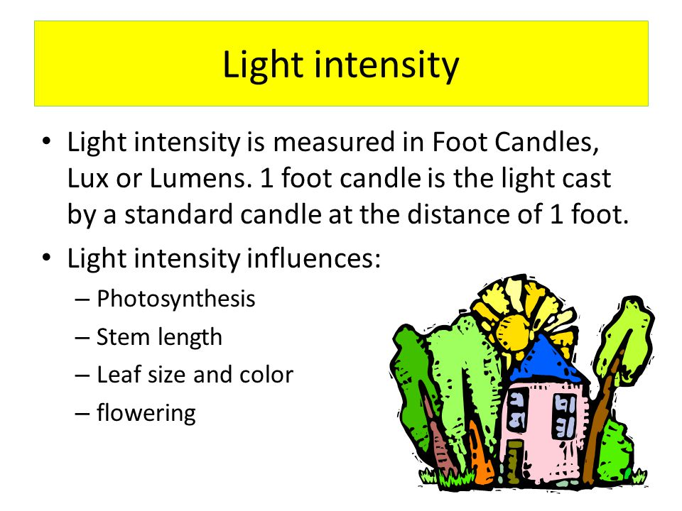 Light Intensity Factors that influence intensity of sunlight – Curtains, trees in the landscape, uv filters on windows, weather, season, cleanliness of the glass, low E glass, paint color of the room… – Too much light can sunburn a plant