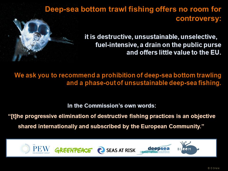 Deep-sea bottom trawl fishing offers no room for controversy: it is destructive, unsustainable, unselective, fuel-intensive, a drain on the public purse and offers little value to the EU.