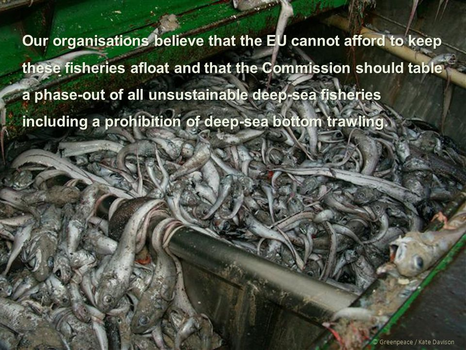 © Greenpeace / Kate Davison Our organisations believe that the EU cannot afford to keep these fisheries afloat and that the Commission should table a phase-out of all unsustainable deep-sea fisheries including a prohibition of deep-sea bottom trawling.