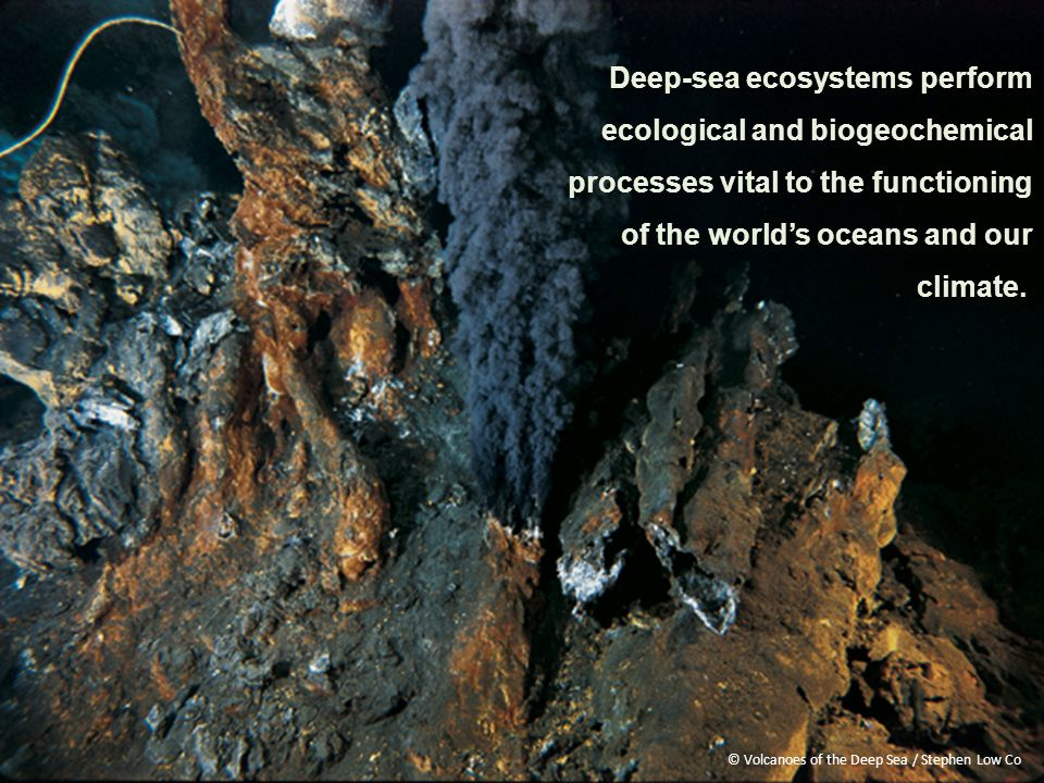 Deep-sea ecosystems perform ecological and biogeochemical processes vital to the functioning of the world's oceans and our climate.