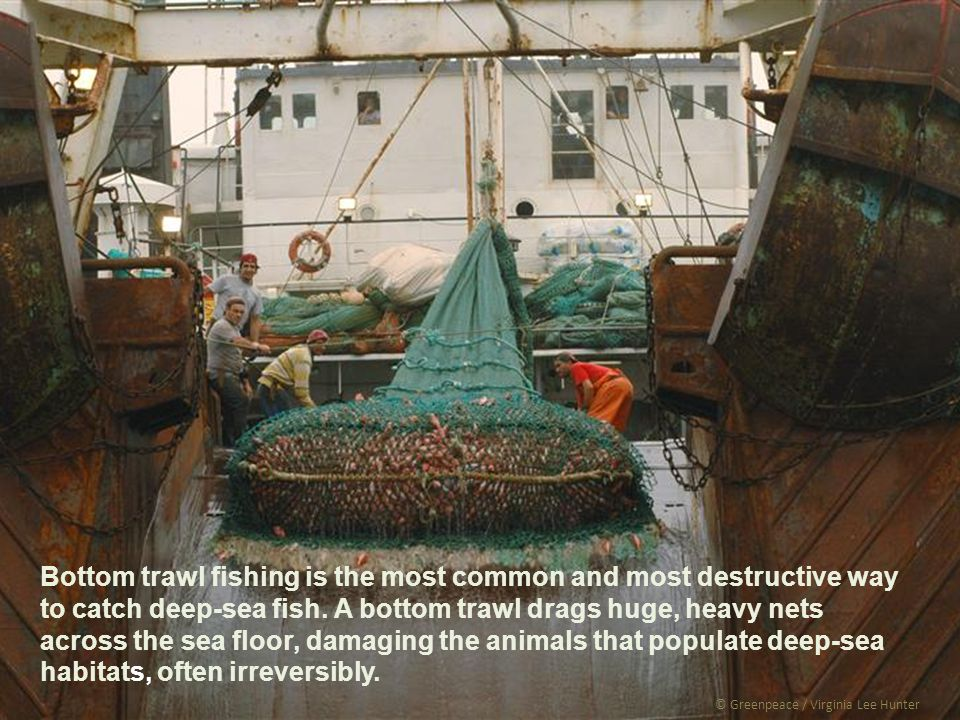 © Greenpeace / Virginia Lee Hunter Bottom trawl fishing is the most common and most destructive way to catch deep-sea fish.