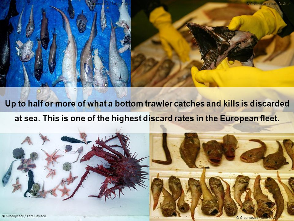 Up to half or more of what a bottom trawler catches and kills is discarded at sea.